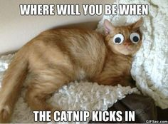 Love Cute Animals shares pics of playful animals, cute baby animals, dogs that stay cute, cute cats and kittens and funny animal images. Funny Animal Quotes, Funny Animal Pictures, Cute Funny Animals, Cute Baby Animals, Funny Cute, Cute Cats, Animal Funnies, Animal Pics, Cat Fun