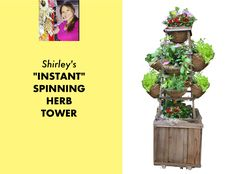 """Watch and learn how to make my """"Instant, Spinning Herb Tower"""" using a simple wood or metal tomato cage! No construction involved. Grow a huge amount of herbs and greens in a tiny space. Hydroponic Growing, Hydroponics, Container Plants, Container Gardening, Plant Design, Garden Design, Los Angeles Landscape, Tomato Support, Tomato Cages"""