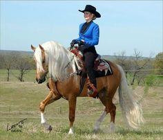 Indigo Go Gold - Morgan Palomino Cowboy Dressage