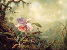 Heliodores Woodstar And A Pink Orchid  by Martin Johnson Heade