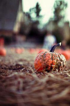 Pumpkin Farm, Autumn Garden, Vegetables, Outdoor, Food, Bliss, Colors, Outdoors, Essen