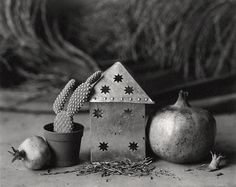DOMINIQUE BOLLINGER _ Grenades et cactus