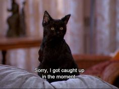 47 Reasons Salem From 'Sabrina The Teenage Witch' Is Your Spirit Animal Funny Cat Videos, Funny Cat Pictures, Reaction Pictures, Animal Pictures, Tv Quotes, Movie Quotes, Funny Quotes, Salem Cat, Salem Saberhagen