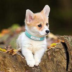 New Siberian Husky Dog Million Bones Dollar Novelty Funny Money FREE SLEEVE
