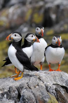 Puffin Group by Rachel Slater on 500px
