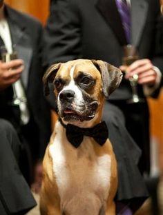 Dog Bow Tie - The Little Black Tie. $15.00, via Etsy.