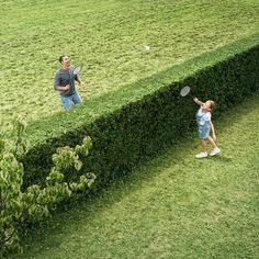 Erfahrt Außerdem, Welche Nützlichen Eigenschaften Eine Hecke Sonst Noch  Haben Kann: Bosch Ahs.com A Hedge As A Badminton Net? Well, Why Not!