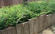15 Brilliant Garden Edging Ideas You Can Do at Home… | http://www.ecosnippets.com/gardening/15-garden-edging-ideas/