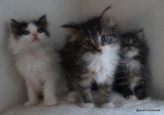 Ta kontakt med dyrebeskyttelsen om du har lyst til å adoptere en hjemløs pus
