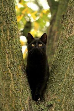 \Kittycat in a tree...\ by SaNNaS.deviantart.com on @deviantART