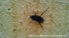 Diario De Un Zocato. : La Cucaracha Roaches, Insects, Diary Book