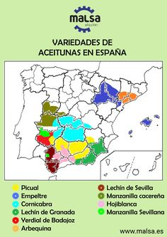 #infografia #aceituna #agricola #recoleccion #picual #arbequina #hojiblanca