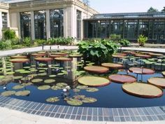 A small section of the extensive conservatory and a one of the many waterlily pools at Longwood Gardens