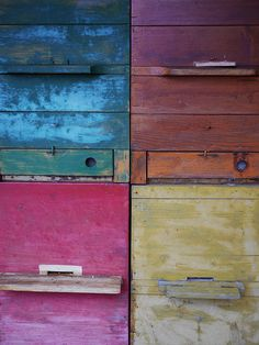 keeping bees in colorful bee hive boxes! Dixie North ain't just about the Show Barn -- We've got hobby farm dreams too! Beekeeping is one future possibility.