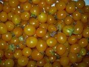 Blondkopchen Heirloom Cherry Tomato from TomatoBob.com