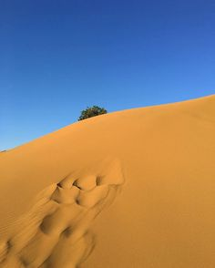 Ammothines - in the Sand Dunes of Lemnos. Sometimes such landscapes fascinate me more than dense vegetation - I guess it's no wonder North Africa is the top destination on my bucket list since. North Africa, Greek Islands, That Way, Beaches, Instagram Posts, Outdoors, Awesome, Beautiful, Greece
