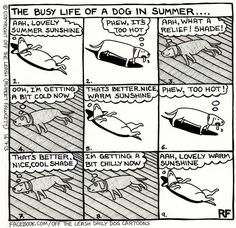 "The ""dog days"" of summer"