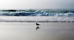 A gaivota e sua praia...