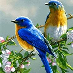Ideas For Blue Bird Pictures Beautiful Cute Birds, Pretty Birds, Beautiful Birds, Animals Beautiful, Cute Animals, Baby Animals, Animals Amazing, Pretty Animals, Two Birds