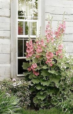 Garden English cottage garden Garden planning Cottage garden Plants Small gardens - Hollyhock Shed Hollyhock Shed - .nd holiday cottages also started maintaining cottages for beauty and gran Small Gardens, Outdoor Gardens, Farm Gardens, Beautiful Gardens, Beautiful Flowers, Colorful Flowers, Design Jardin, Cottage Garden Plants, Dream Garden