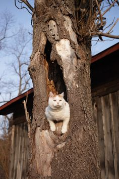 木のあな - かご猫 Blog
