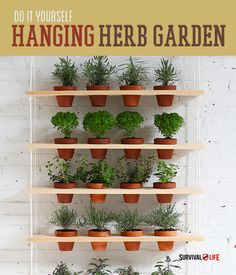 Try this herb garden indoors Kitchen Spaces Pinterest