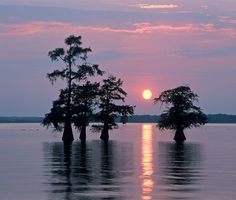 Caddo Lake, so beautiful at sunset.