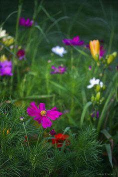 ~~Midsummer Garden by merripat~~