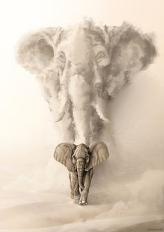 Image of Born to be Wild: Elephant