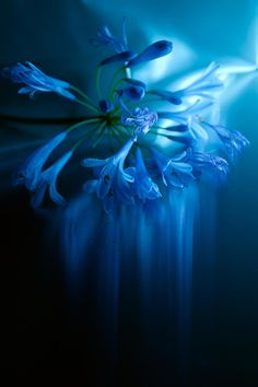 Impressionism~Light traces of blue by Lafugue Logos   on 500px