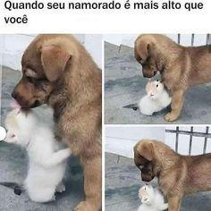 Amor Quotes, Love Memes, Cute Images, Labrador Retriever, Haha, Corgi, Animals, Bts, Samara