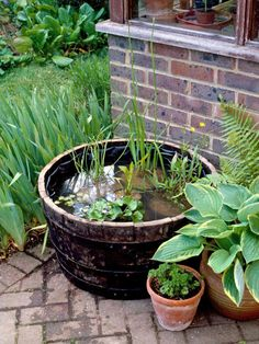 Pond in Wooden Barrel Fits in Small Space  (also: http://www.examiner.com/article/a-whiskey-barrel-water-garden)