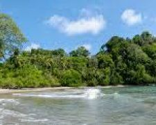 Spend 5 days and 4 nights in Costa Rica's incredible Manuel Antonio national park where you can explore beaches and jungles while PlantSnapping tropical flowers, plants, and trees! Prize includes airfare and accommodations for two people. Costa Rica, River, Plants, Outdoor, Outdoors, Planters, Outdoor Living, Garden, Plant