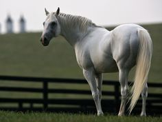 Horse | background great horse racing backgrounds for computer wallpaper horse ...