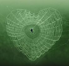 Valentine's day-Heart Shaped Spider Web