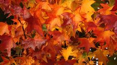 fall colors wallpapers computer