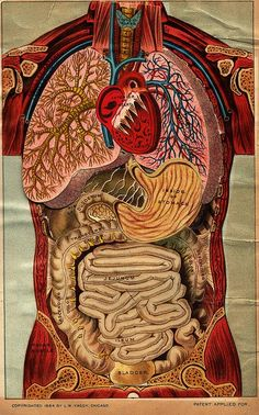 Human Anatomy Pop Up Book published 1884  Fuente Paraphilia Magazine (oooo)