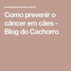 Como prevenir o câncer em cães - Blog do Cachorro