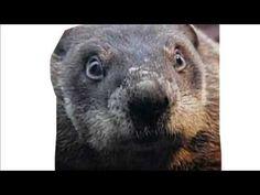 Marmotte chiante - Hey le constipé ! Animals, Animais, Animales, Animaux, Animal, Dieren