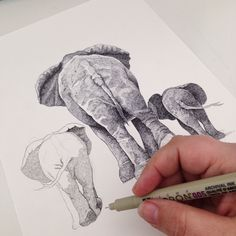 WIP. Adding another elephant to the family. Pigma Micron pen 0.05. Cross hatching – Hand drawn artwork by Draw Doodles Study.