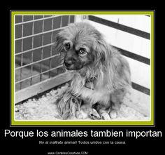 Porque los animales tambien importan No al maltrato animal! Todos unidos con la causa.