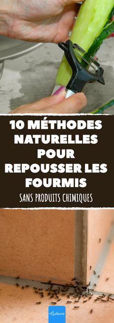 Si les fourmis ont déjà pris possession de votre domicile, voici 10 astuces naturelles pour les repousser sans utiliser de produits chimiques ! #fourmi #fourmis #maison #maisons #repulsif #repulsifs #naturel #naturels #insecte #insectes