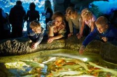 Click here to learn about the Aquarium in Gatlinburg! http://www.cabinfevervacations.com/blog/5-things-wouldnt-expect-find-aquarium-in-gatlinburg/