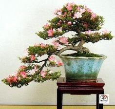Google Afbeeldingen resultaat voor http://www.mo-yogi.nl/bonsai/images/kengai2jpg.jpg