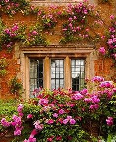 Round a Window climbing roses all around the windows.the scent must be amazingclimbing roses all around the windows.the scent must be amazing Colorful Roses, Through The Window, Climbing Roses, Garden Cottage, Manor Garden, Dream Garden, Windows And Doors, Beautiful Gardens, Outdoor Gardens