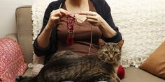 3 Easy Projects To Make Your Pet Love You Even More