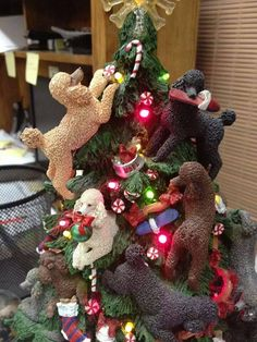 """poodle tree From your friends at phoenix dog in home dog training""""k9katelynn"""" see more about Scottsdale dog training at k9katelynn.com! Pinterest with over 18,600 followers! Google plus with over 120,000 views! You tube with over 400 videos and 50,000 views!! Serving the valley for 11 plus years Twitter 200 plus!"""