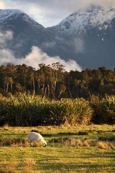 Haast - New Zealand (byrandomix) IFTTT Tumblr