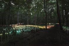 longwood gardens at night - Google Search