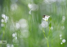 by oisandbufoto. Please Like http://fb.me/go4photos and Follow @go4fotos Thank You. :-)